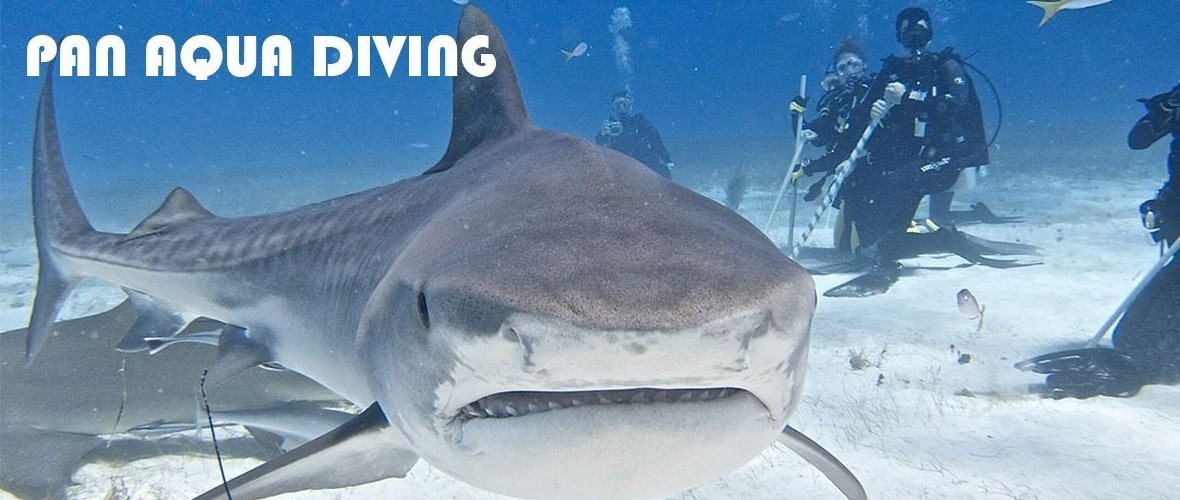 Tiger Shark Slide